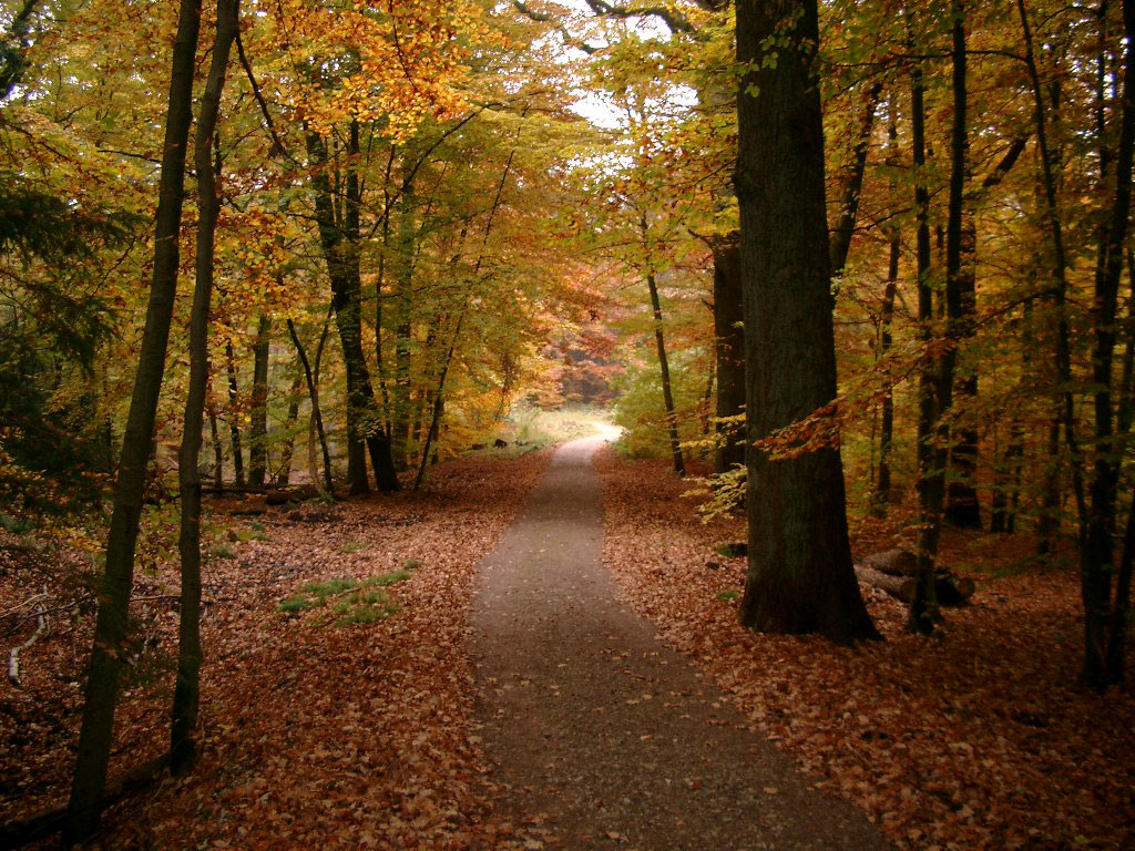 Herbstwald Desktop Wallpaper