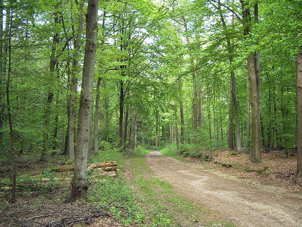 Bildergebnis für Der Wald - kostenlose Fotos