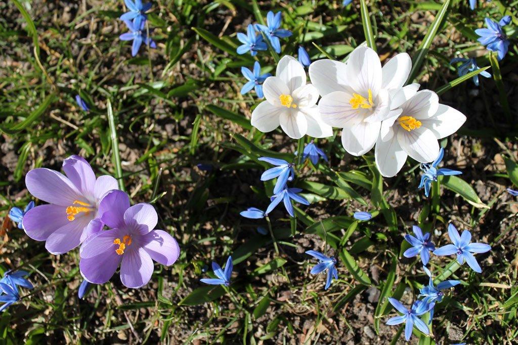 Frühlingsbilder mit schönen Frühlingsblumen