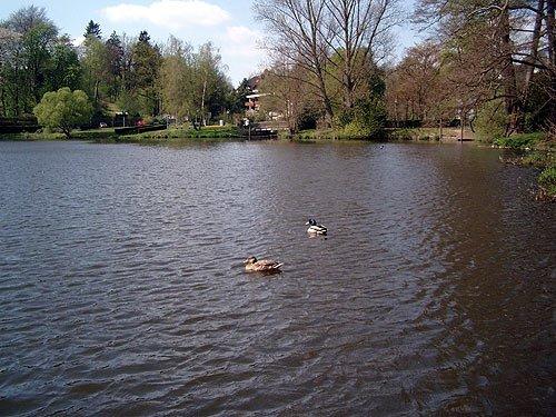 Enten im Wasser