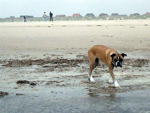 Dänemark - Fanoe am Strand