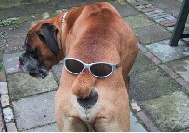 Lustige Bilder - Witzige Bilder mit Hunden