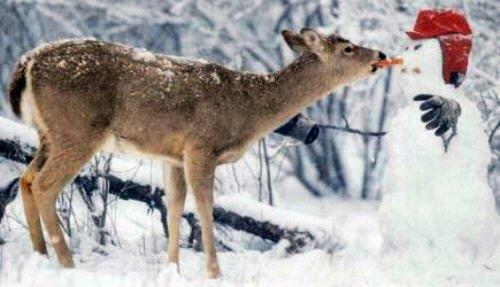 Rudolph Reindeer Christmas - Rentier Weihnachtsmann