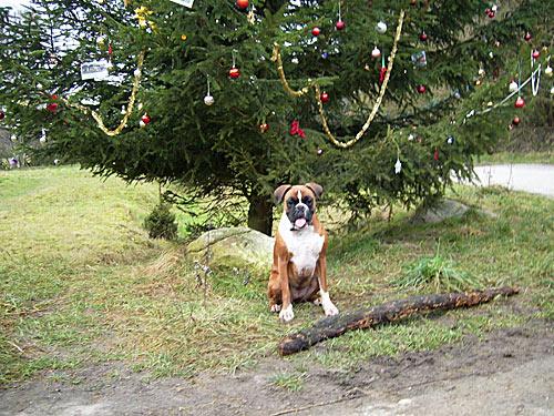 Hund sitzt vor Weihnachtsbaum - fröhliche Weihnachten 2007
