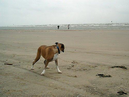 Nordsee - Der Strand Insel Fanoe in Daenemark