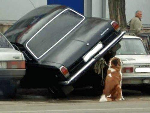 lustige Bilder Auto - funny pics