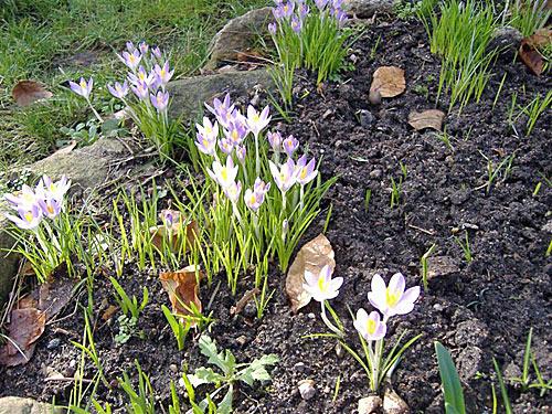 fruehling - Blumen