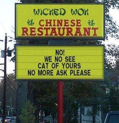 lustige Katzen Bilder - funny cats pics