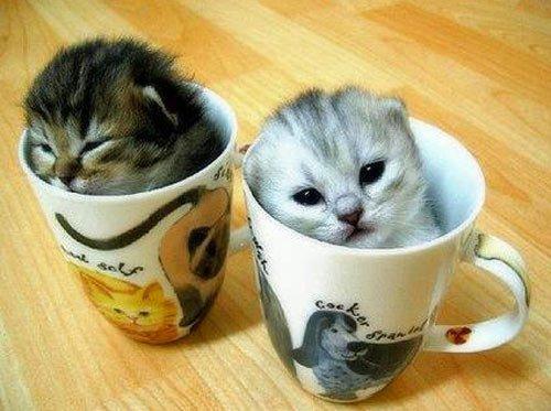 ... Katzen machen es sich in der Kaffeetasse gemütlich – funny cats