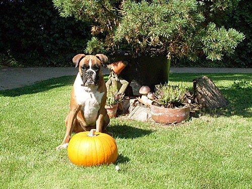 Halloween Kuerbis - Pumkin