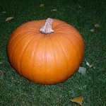 Halloween Pumpkin - Kürbis