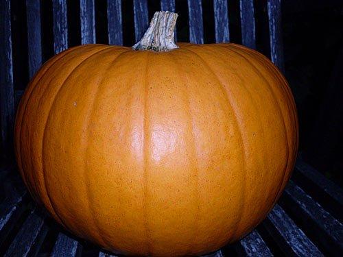 Kuerbis - Halloween Pumpkin