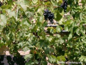 Wein - Hintergrundbild - Herbst Wallpaper