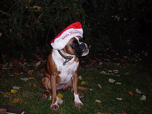Froehliche Weihnachten - Merry Christmas