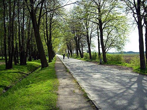 Frühling Vierlande Frühlingsbild
