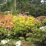 Lea-Gardens-England-3
