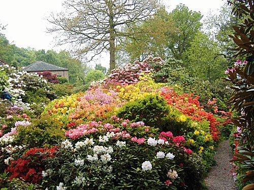 Lea Gardens - Rhododendron Garten in England