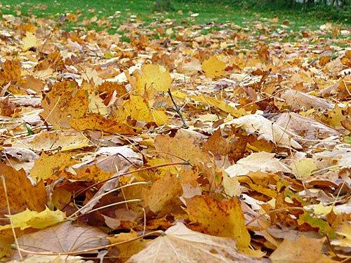 Herbst - Herbstlaub fällt von den Bäumen