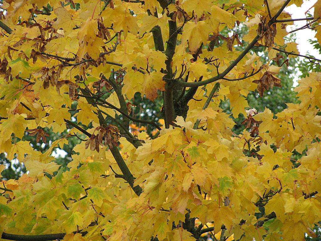 Herbst Hintergrundbild