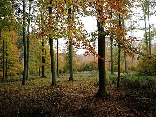 Herbst - autumn leaves