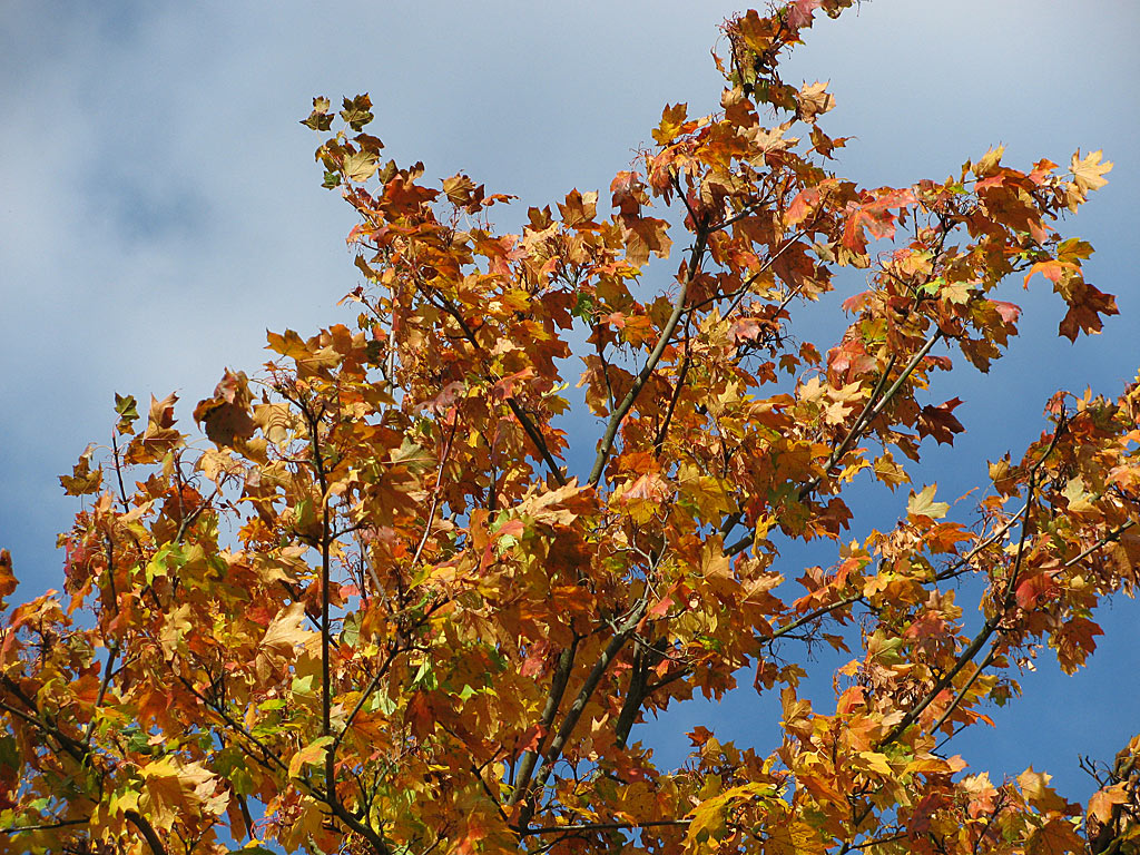 Hintergrundbild Herbst