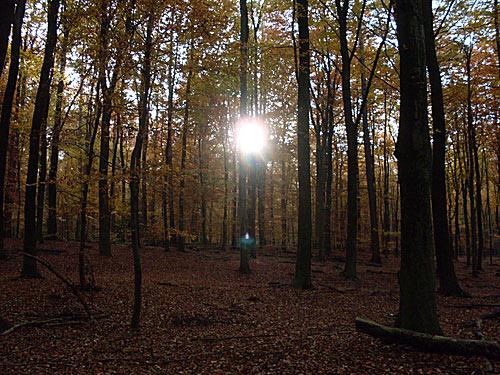 Sonnenuntergang Herbst