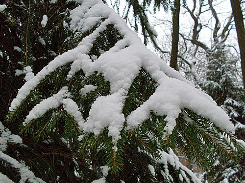 Tannenbaum Bilder.Tannenbaum Im Schnee Bilder Blog