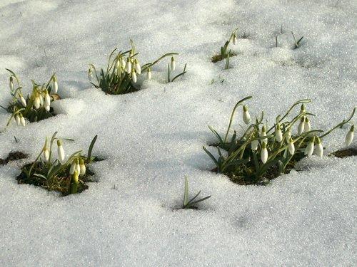 Frühling - Frühlingsblumen