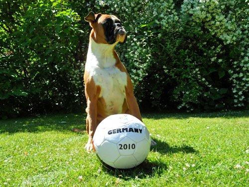 Hund bei Fußball WM 2010