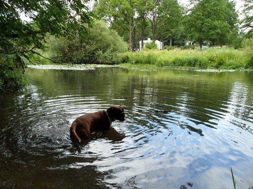 Hund badet