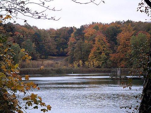 Herbst Wald Teich