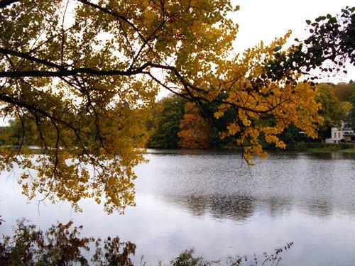 Herbst Bild Herbstlaub autumn