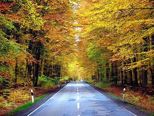 Sachsenwald Strasse im Herbst Herbstbilder