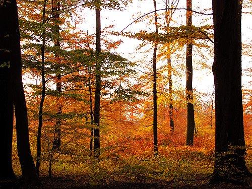 Herbst wald sachsenwald herbstbilder – foto siefken