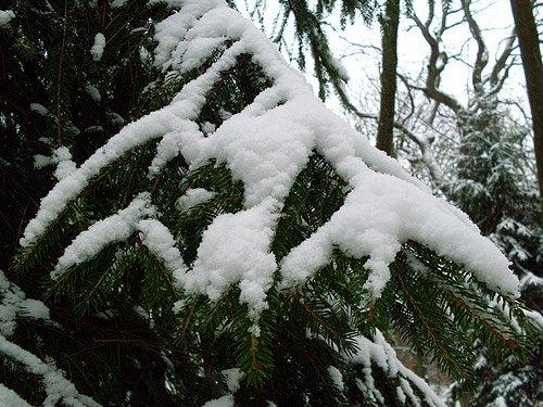 Tannenbaum - Weiße Weihnachten