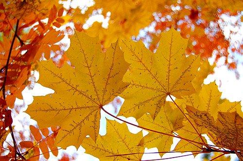 Goldener Herbst Bilder Herbstblätter