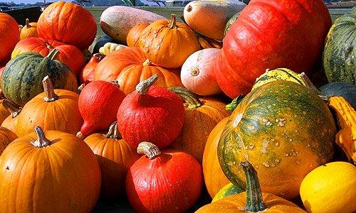 Kürbis - Herbst Bilder