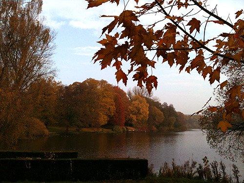 Herbstblätter Herbstbilder