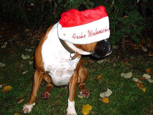 Frohe Weihnachten - Weihnachtsmann Hund