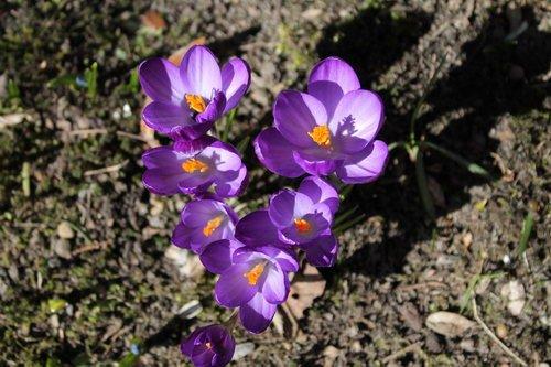 Fruehling-Blumen