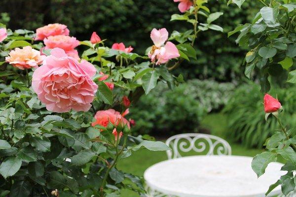 Rosen Sommer