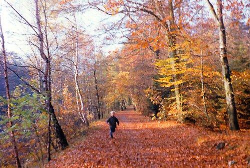 Herbst Reinbek