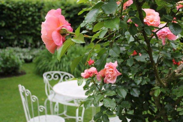 Rosen Garten