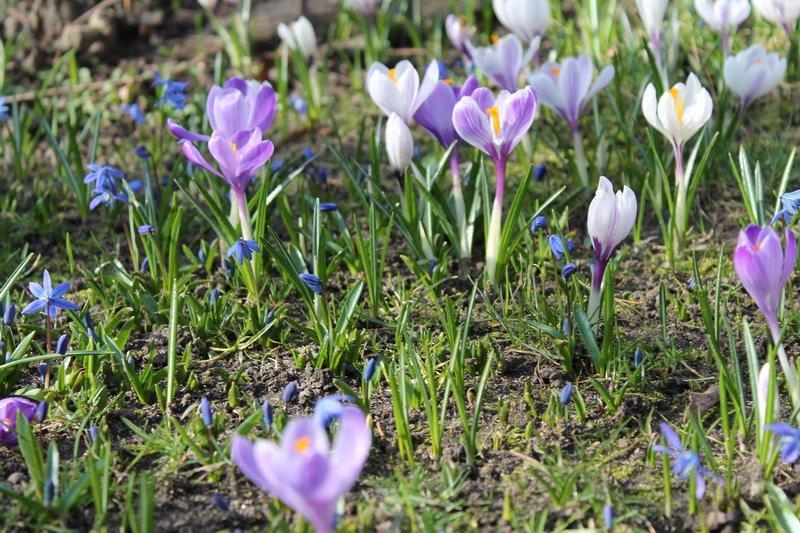 Frühling Blumen