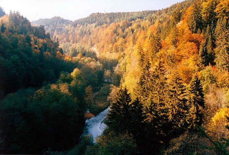 Herbst Schwarzwald