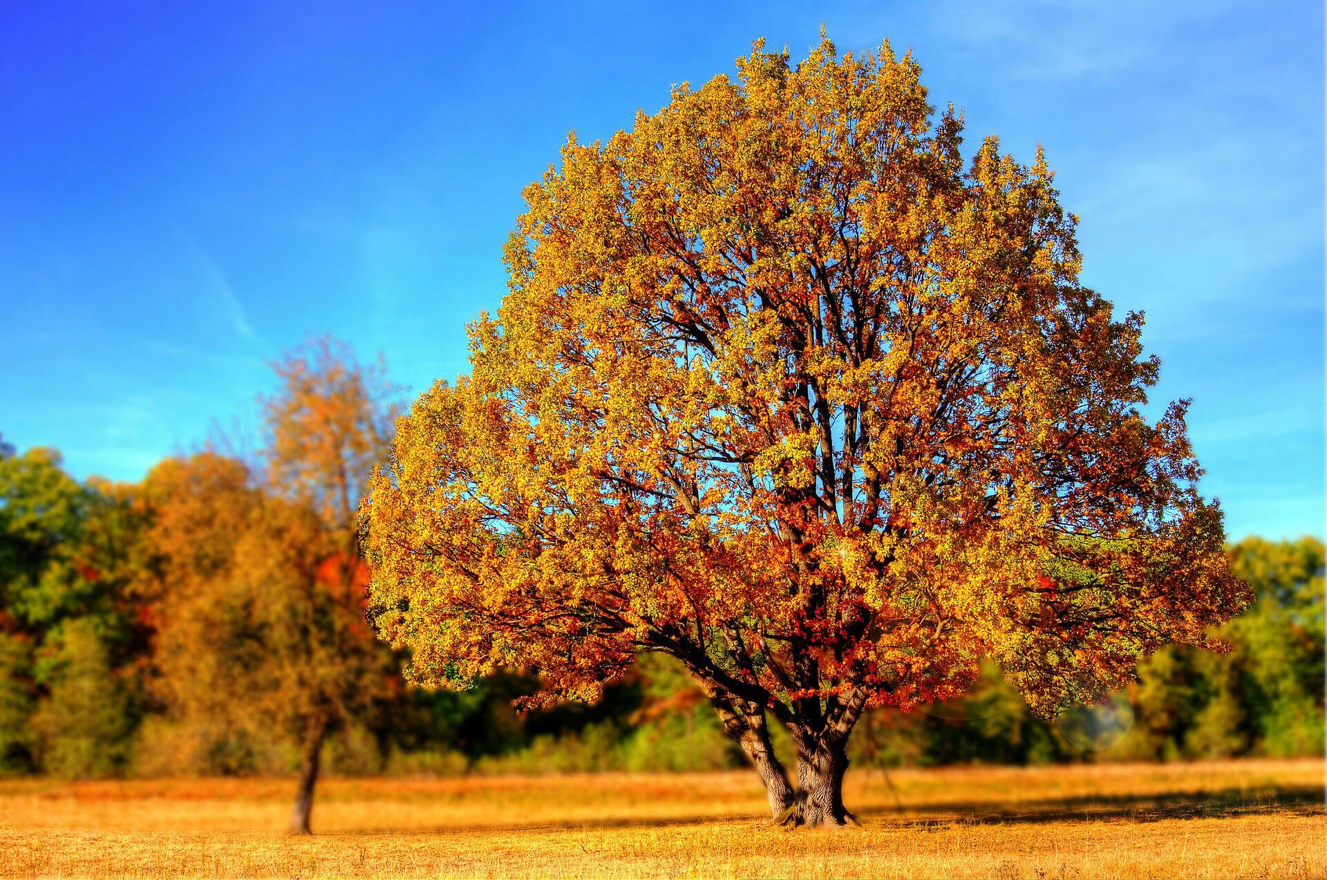 Herbst Wallpaper