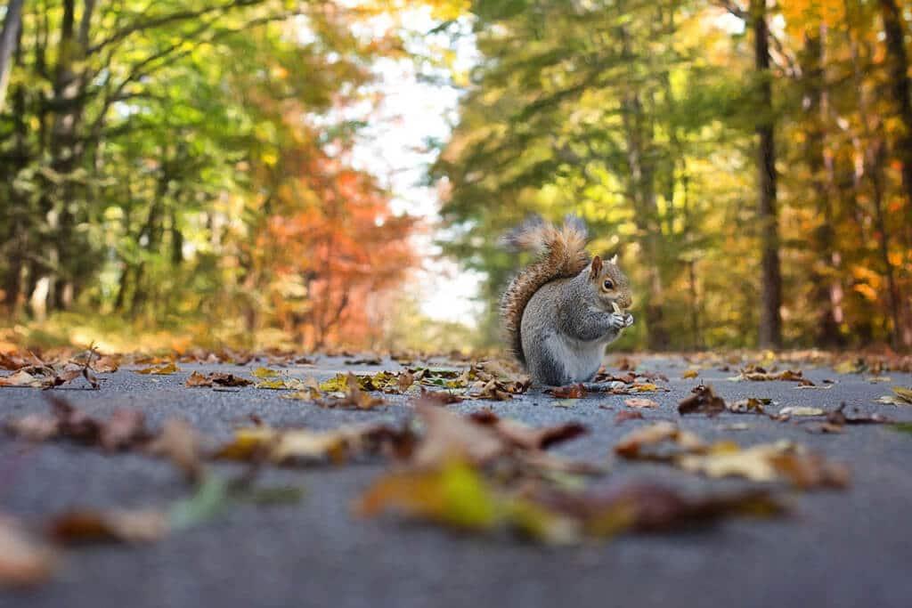 Herbstwald mit Eichhörnchen