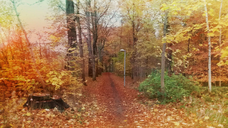 Herbst Herbstwald