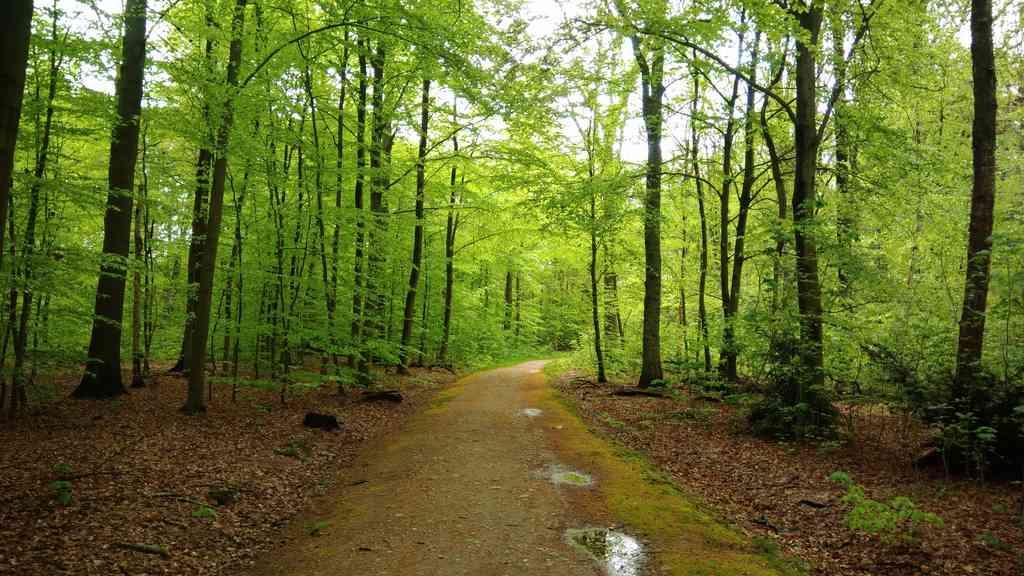 Frühlingswald in Reinbek