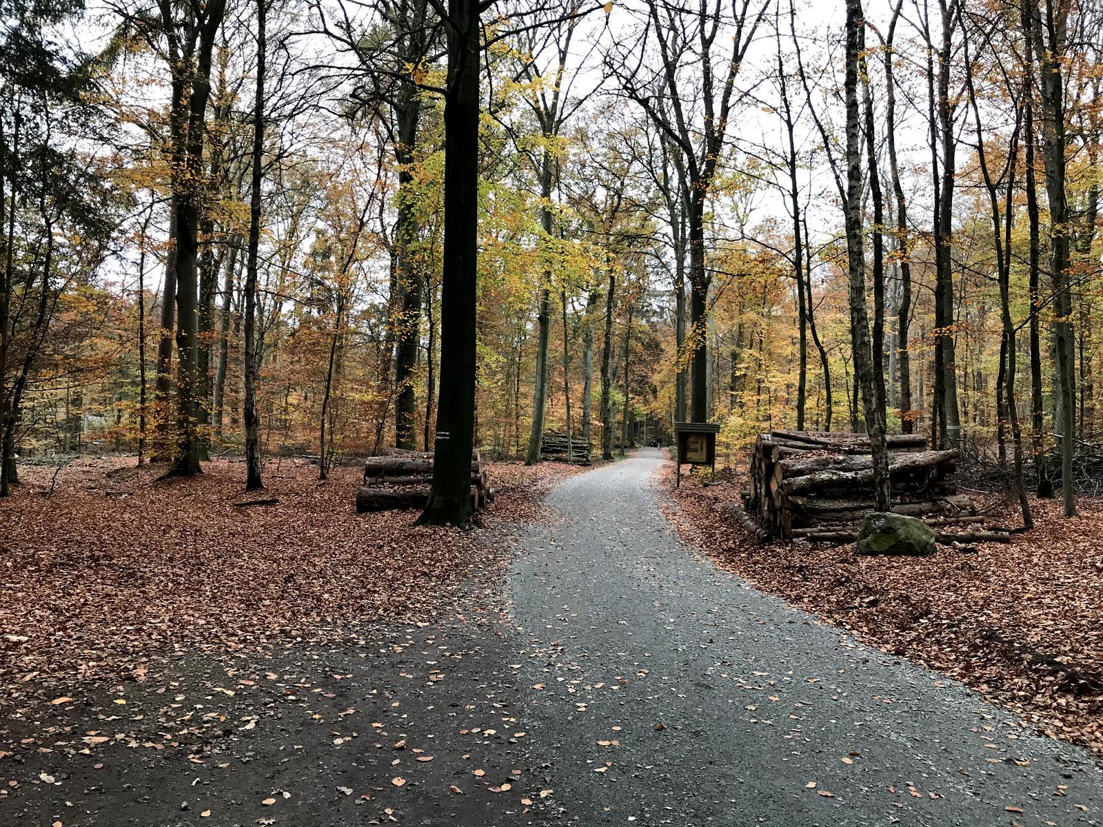 Herbstwald Herbst Hintergrundbild